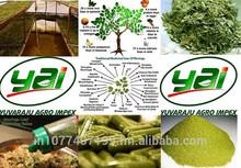 Moringa Oleifera Dry Leaf Supplier in Dubai / US / UK / Singapore / Malaysia