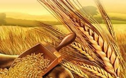 2014 India's Best Product of Wheatgerm Oil