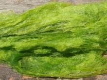 Dried seaweed - Ulva - Aonori