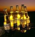 la cerveza corona para la venta a precios rebajados