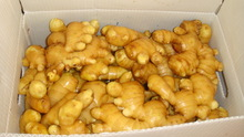 2014 new season yellow ginger