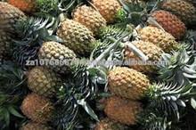 Premium Fresh Pineapples