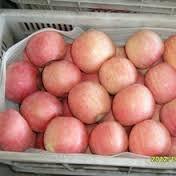 Grade A High Quality Fresh Red Apple