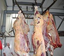 High Quality Frozen lamb/goat/mutton whole carcass 4 / 6 /10 way cuts