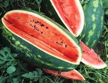Fresh Fruit-Water Melon New crop