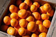 De la fruta cítrica/naranja mandarina