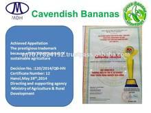 Fresh Viet Nam sweet Cavendish Banana best in the World