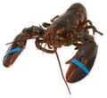 Live lagostas europeia \ frescos e congelados lagostas