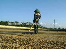 VIETNAM ROBUSTA COFFEE BEANS NEW CROP MOISTURE 12.5% MAX