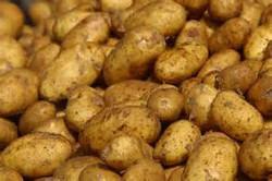 Fresh potato/Holland potatoPotato prices