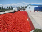 High quality and best price canned and Bulk tomato paste, tomato ketchup 28-30%,100% natrual tomatoes
