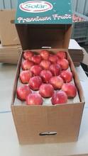 Italian Apples - Gala, Granny, Red, Fuji