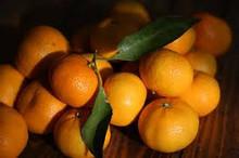 fruto cítrico mandarina con propia huerta y la fábrica de procesamiento