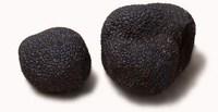 BLACK TRUFFLE (Tuber Melanosporum Vitt)