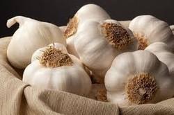 indian garlic/fresh garlic/natural garlic low price