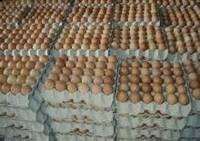 Huevo fresco& marrón blanco