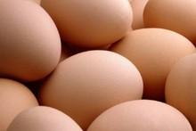 Avesdecorral huevos frescos, huevos de gallina