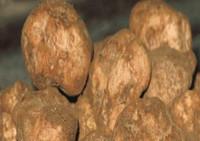 iran's truffel