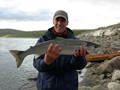 Trực tiếp Atlantic Salmon | tươi và trực tiếp / Norwegian Salmon | Salmon Fillet đông lạnh