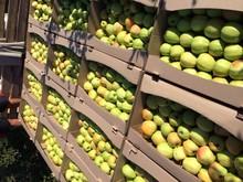 Fresh Apples Vinnitsa Ukraine