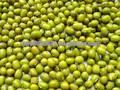 haricots mungo vert pour la germination ou cuire