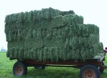 High Protein Sun Dried Alfalfa Hay