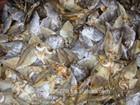 Dried Fish (Danggit)