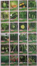 Thai plant seed for DIY (Vegetable , Fruit , Flower )