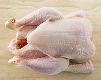 Frozen whole chicken Brazil best price