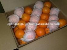 Fresh Citrus fruits, fresh lemons, fresh navel and valencia oranges