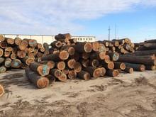 America Black Walnut Logs