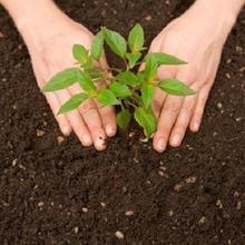 Planting Trees, Shrubs Or Vines