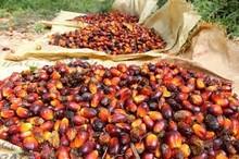 olio di palma rosso prezzo competitivo