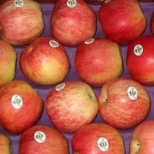 Royal Gala apples for sale