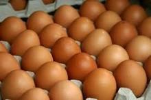 De color marrón huevos( precio competitivo)