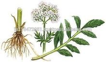 100% Natural Valerian Root Oil