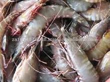 fresh shrimp bulk sales 2015