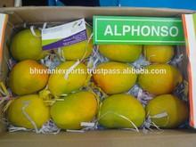 Fresh Mangoes/Alphonso Mangoes for Europe!