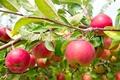 orgânica bioestimulante para melhorar a qualidade dos frutos e produção