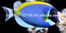 Live Aquarium Tropical Fish