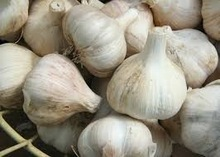 organic Garlic 2015 sales