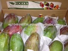 Egyptian mango (Sokary, Zebdia, Kiet, Kent, Seddiqa)