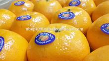 Kino Mandarin Tangerine Orange Citrus fruit from Pakistan