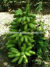 Fresh Banana Vietnam origin