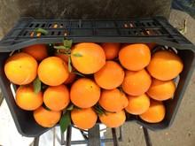 Citrus Fruits (Prime Fruits)