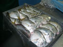 Frozen Whole Round Moon Fish,Frozen Fishes,Best Quality Frozen Fishes