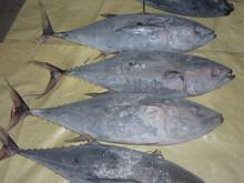 Frozen Yellowfin Tuna Whole