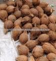 venditori di cocco da india