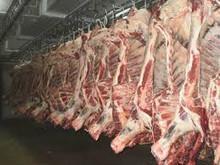 Beef Carcass - Grade A - Halal