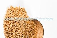 Price of Whole Grain Wheat